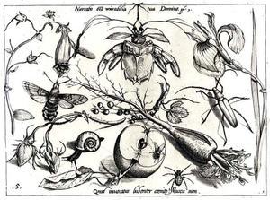 Mot, kever en andere insecten, bloemen, slak en halve appel