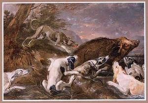 Een everzwijn opgejaagd door honden