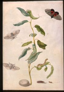Wilgetak met vlinder, rupsen en poppen