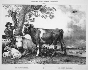 De jonge stier