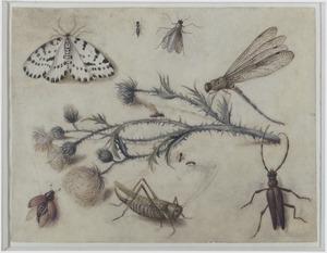 Insecten rondom een disteltak