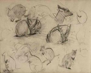 Schetsboekblad met schetsen van kangoeroe's en hertachtige