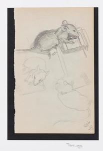 Studies van muizen bij een val
