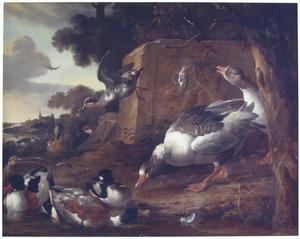 Watervogels in een landschap