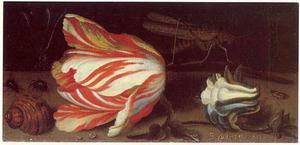Tulp, een akelei, insecten en een schelp op een stenen plint