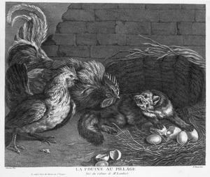 Vos door haan en kip betrapt bij het roven van eieren