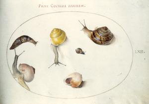 Vier slakken, een naaktslak en een slakkenhuis