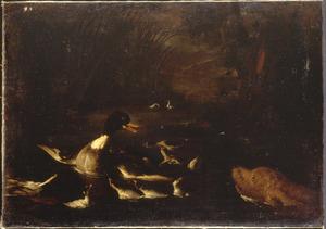 Spaniël zwemt achter een eend met jongen aan