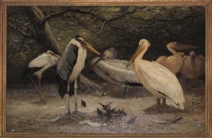 Maraboe, pelikanen, ooievaar en mussen bij de vijver