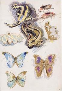Schetsblad met vlinders, vuursalamanders en kakkerlakken