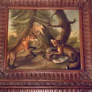 Twee vossen in gevecht om een fazant