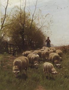 Herderin met kudde schapen
