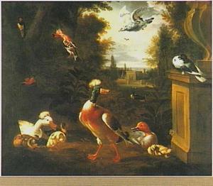 Eendenfamilie en andere vogels in een park