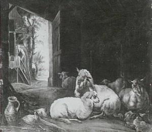 Schapen in een stal