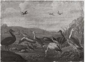 Vogels aan de waterkant
