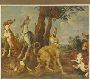Meute jachthonden loerend naar een in een boom gevluchte kat