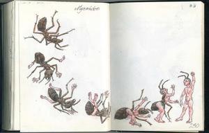 Metamorfose van mieren Myrmidonen tot mens