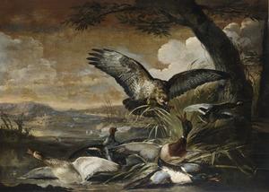 Buizerd vliegt eenden aan in een landschap
