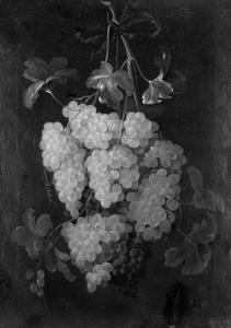 Festoen van druiven