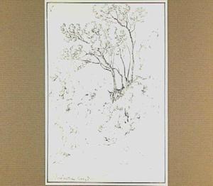 Heuvellandschap met bomen in de omgeving van Roccantica