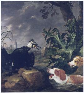 Honden belagen een aalscholver buiten een stad