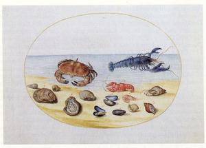 Krab, kreeften en schelpdieren