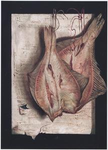 Twee gedroogde platvissen, hangend voor een blad papier