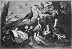 Landschap met verschillende vogels