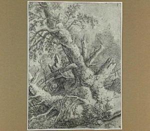 Boslandschap met boomstammen