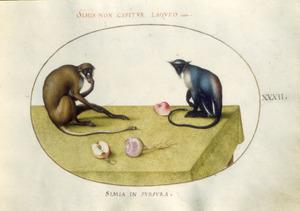 Twee apen, een meiknol en een appel op een gedekte tafel