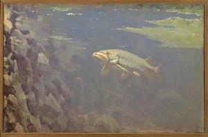 Vis in een aquarium