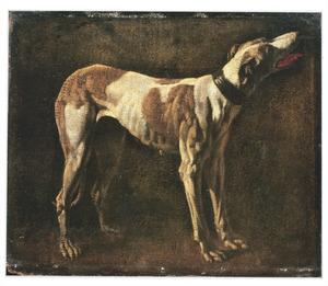 Studie van een jachthond
