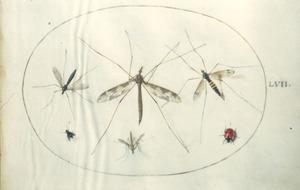 Vier muggen, vlieg en kever