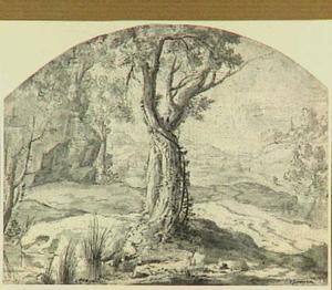 Heuvellandschap met op de voorgrond een boom