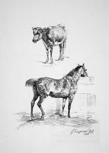 Studie van kalf en paard