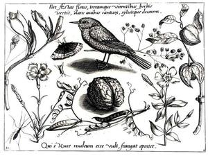 Walnoot, vogel, bonen, insecten en bloemen