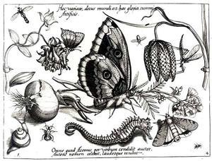 Zeepaardje, kievitsbloem vlinder, mug en andere insecten en bloemen