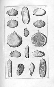 Studie van vijftien schelpen