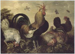 Haan met kippen in een landschap