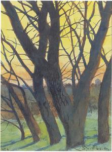 Bomen in de winter bij avondlicht