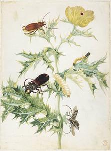 Stekelpapaver, oogvlekkever, glanzende bok, boktor en larves van steenbokkever en kniptor