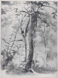 Bomengroep