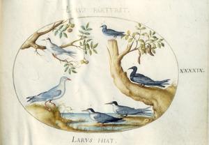 Zes vogels