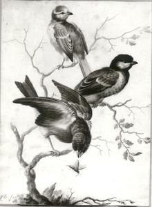 Drie vogels te midden van takken