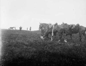Groep paarden tijdens een militaire manoeuvre