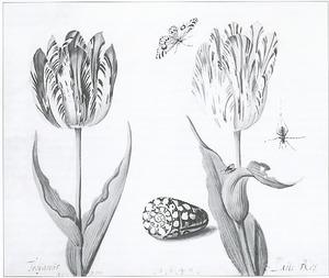 Twee tulpen (Troyanús en Latte Ros) met een gemarmerde conus, spin en bonte bessenvlinder