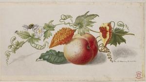 Perzik, vrucht en wijnrank