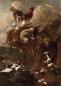 Een rustende kettinghond omgeven door pluimvee