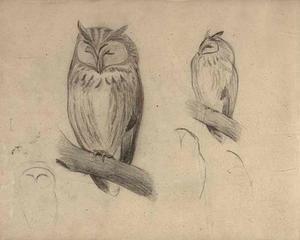 Schetsboekblad met schetsen van uilen