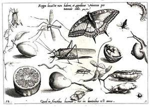 Sprinkhaan, insecten, bloem, bonen, peer en halve citroen